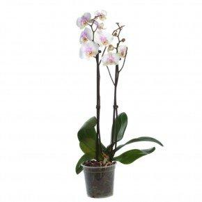 pote orquideas 2