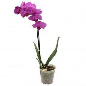 pote orquideas