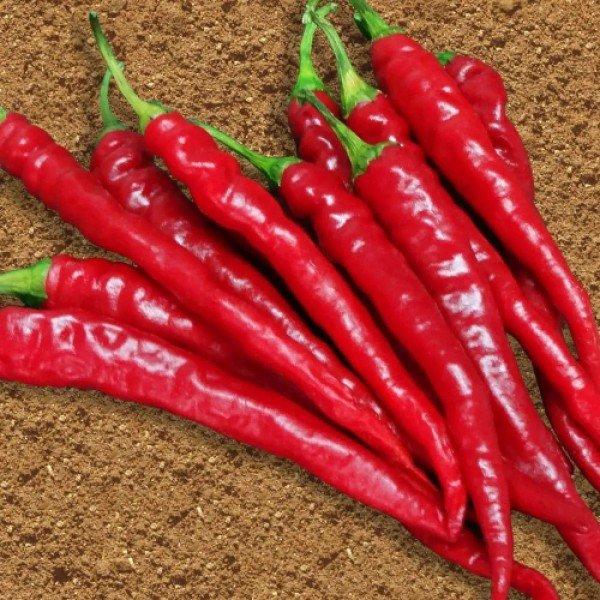 semente pimenta cayenne