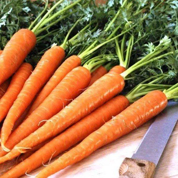 cenoura brs 1