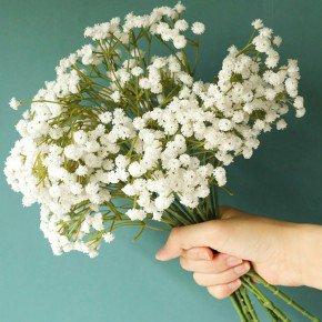 gypsophila elegans mosquitinho branco flor branca for para arranjo 2 bom cultivo