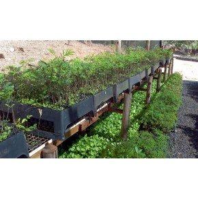 bandeja caixa 140 celulas bentec bom cultivo 2