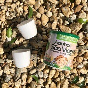 cactos e suculentas bom cultivo kit terrarios elegance vaso mini adubo sao vicente