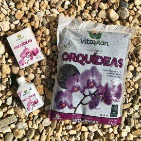 orquidea orquideas bom cultivo substrato fertilizante