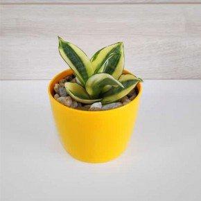 vaso elegance pequeno vaso amarelo nutriplan bom cultivo