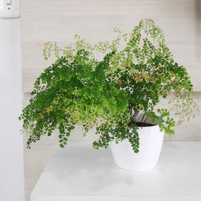 vaso elegance pequeno vaso branco nutriplan bom cultivo