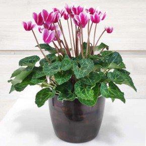vaso elegance redondo n3 5 bom cultivo nutriplan vaso marmore