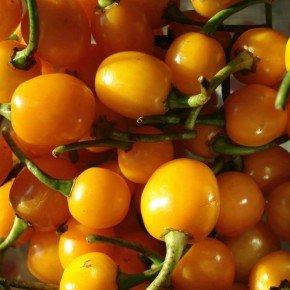 semente arari bode amarela bom cultivo isla pimenta amarela